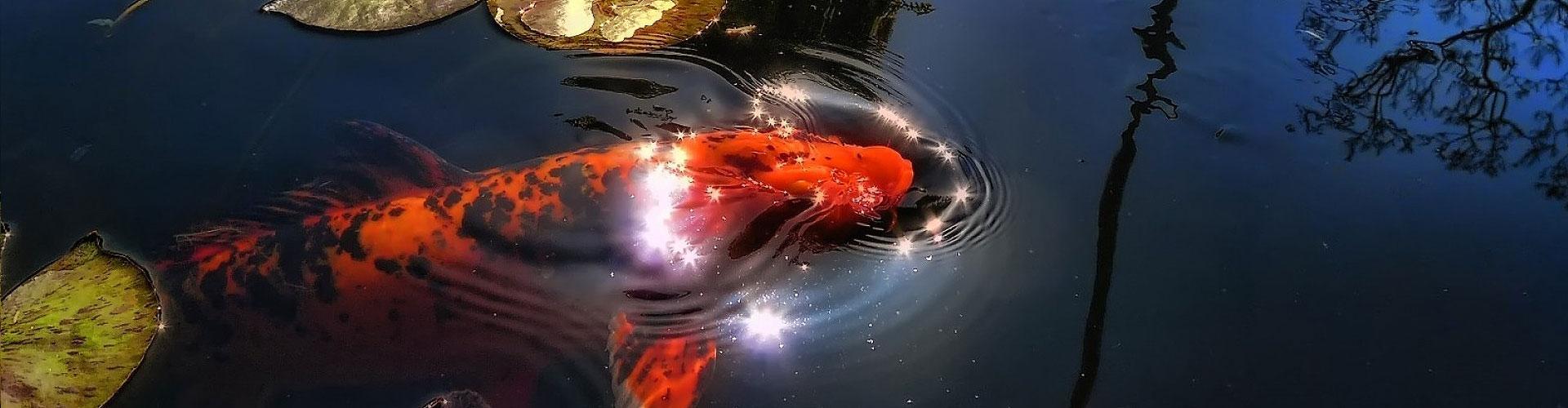 orasne-rybky_hp